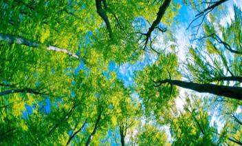 Bosque reflejo en el agua
