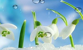 flores de primavera LPW