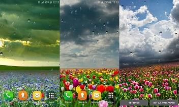 Spring rain LWP by Locos apps