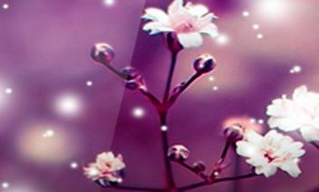 Galaxy S4 Bloemen Afbeelding