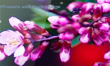 Bloemen en Rain Afbeelding