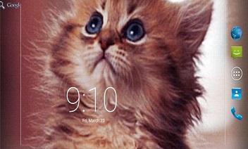 Kitten Lovely Live Wallpaper
