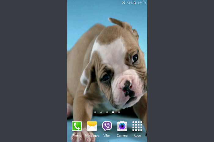 Schattige puppy live wallpaper