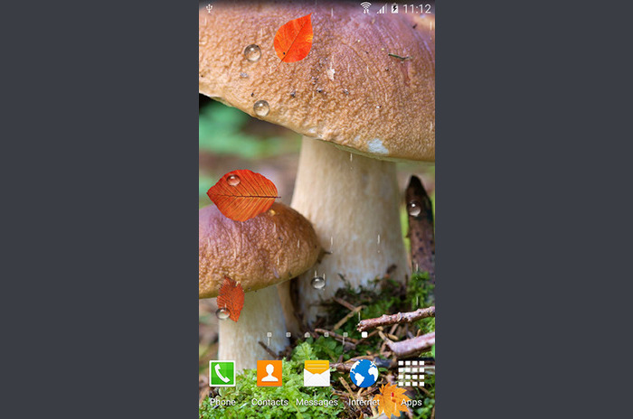 Autumn mushrooms