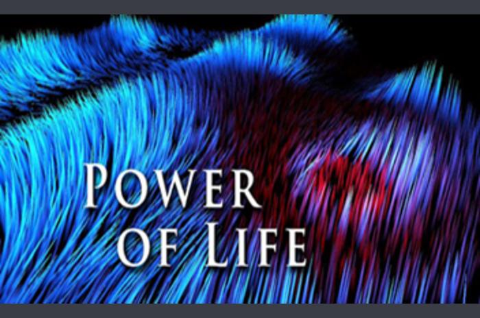 พลังของชีวิต