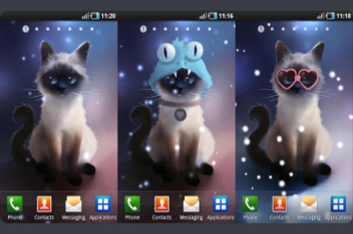 Siamese Cat - Live Wallpaper