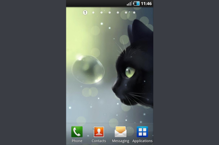 Curious Cat Lite - video wallpaper