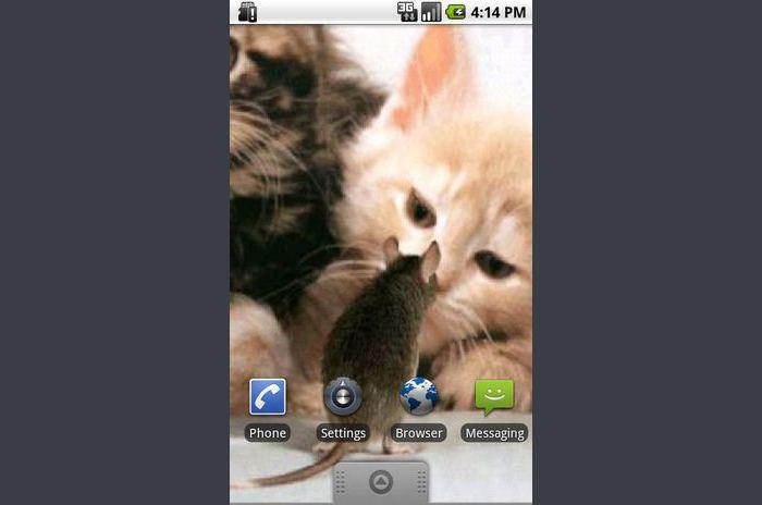 Mačka i miš uživo Wallpaper