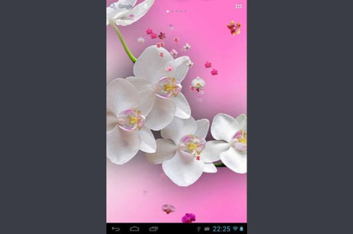 Orkide duvar kağıdı canlı