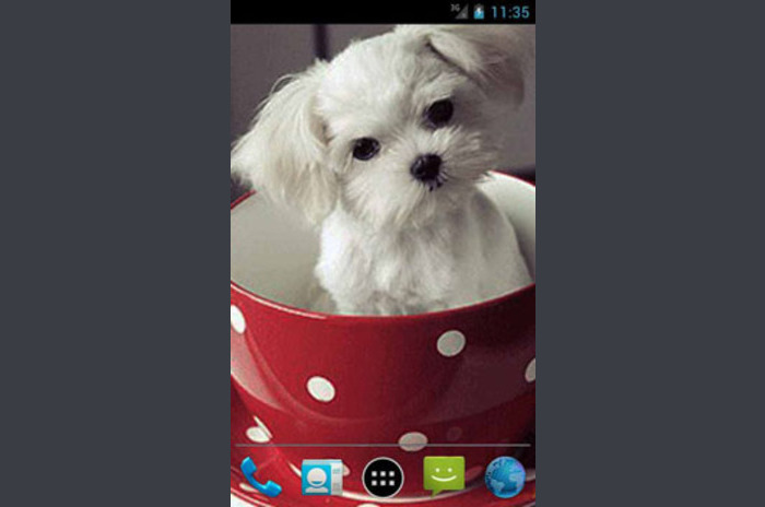 Puppy in een Cup LWP