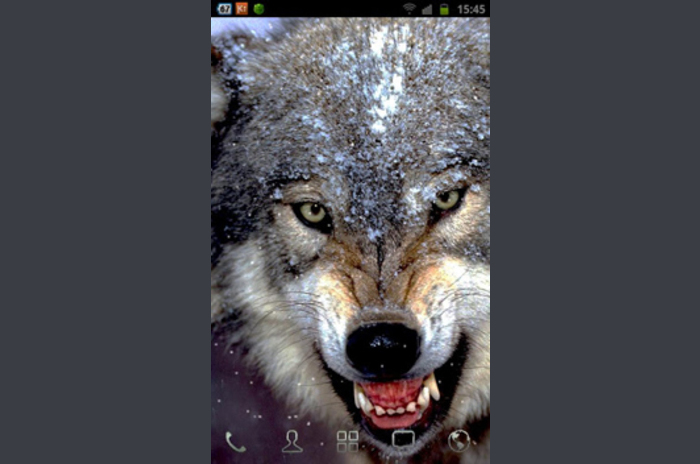 الذئب نظرة LWP