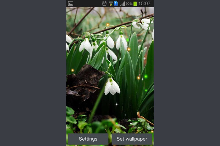Spring snowdrop Live Wallpaper