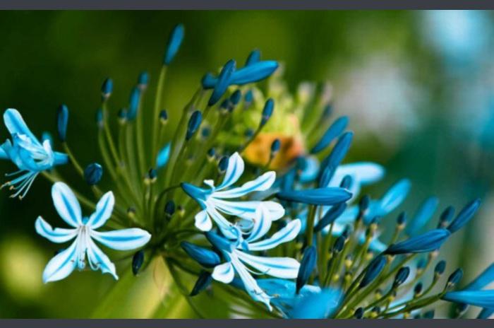 Wiosna przebiśnieg na żywo Tapety