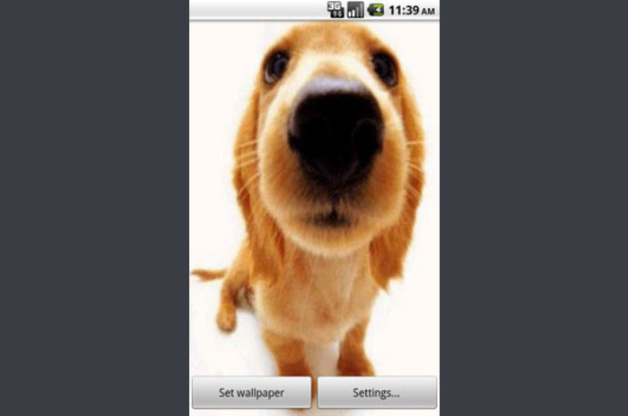 Talky Doggy Live Wallpapers