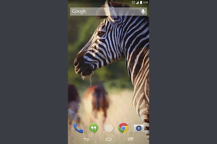 Animaux africains Live Wallpaper