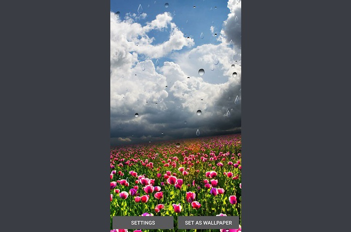 Spring rain LWP by Locos apps