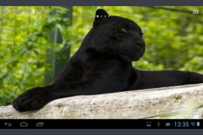 Crna pantera