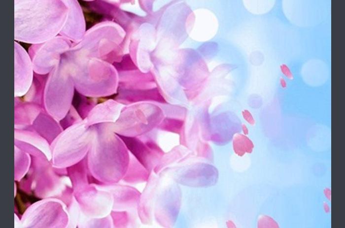 Kwiaty przez Phoenix Tapety na żywo