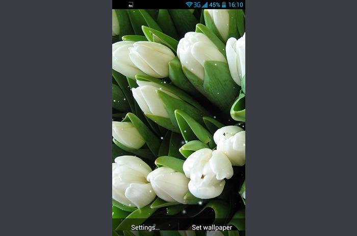 Beyaz çiçekler LiveWallpaper