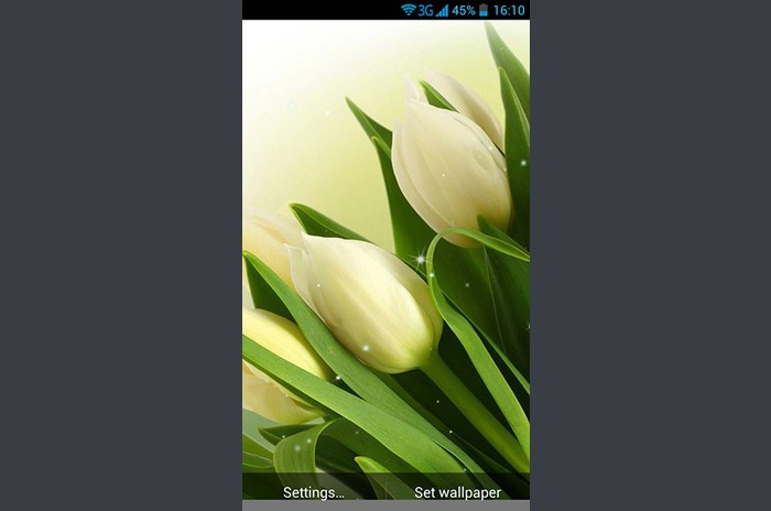 Flores blancas LiveWallpaper