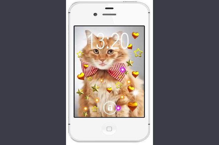 Sevimli Kedi Yavruları canlı duvar kağıdı HD